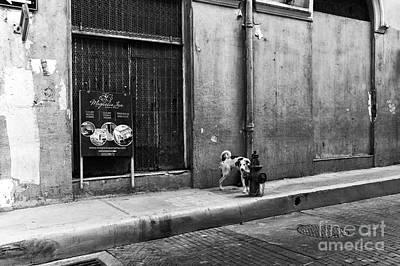 Photograph - Casco Viejo Dog Mono by John Rizzuto