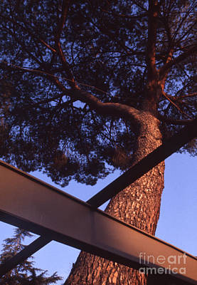 Futurism Architecture Wall Art - Photograph - Case Study House Number 20 Focus On Tree by The Harrington Collection