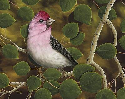 Finch Painting - Cassins Finch by Rick Bainbridge