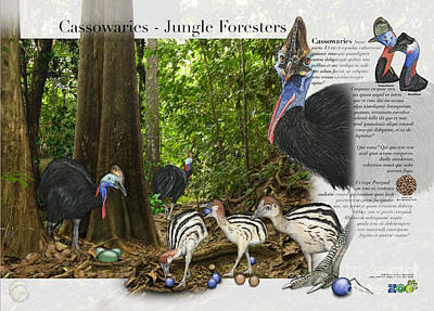 Painting - Cassowaries In Their Habitat - Cassowary - Nature Interpretive Panel - Zoo Tafel - Zoo Paneel- Stock by Urft Valley Art