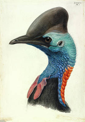 1842 Photograph - Cassowary Head by Natural History Museum, London
