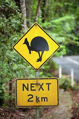 Cassowary Warning Sign Print by Ashley Cooper