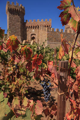 Winter Animals Rights Managed Images - Harvest Castelle Di Amorosa Royalty-Free Image by Scott Campbell