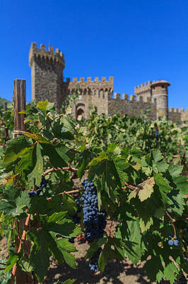 Blue Grapes Photograph - Ripe On The Vine Castelle Di Amorosa by Scott Campbell