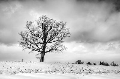 Photograph - Castile Tree by Guy Whiteley