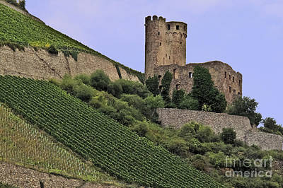Photograph - Castle Ruins And Vineyard by Elvis Vaughn