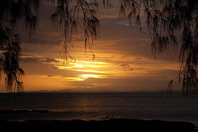 Photograph - Casuarina Sunset 2 by Carole Hinding