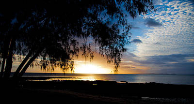 Photograph - Casuarina Sunset by Carole Hinding