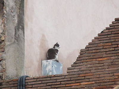 Art Print featuring the photograph Cat Above The Roman Ruins by Tiffany Erdman