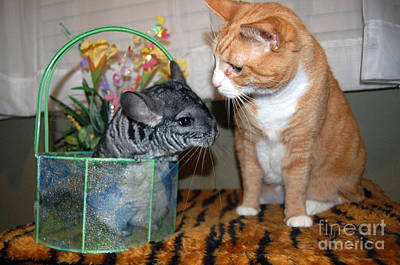 Photograph - Cat And Chinchilla Easter Photo by Debra Thompson