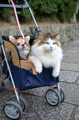 Japan Village Photograph - Cat And Dog Carried Together By Owner by Nano Calvo