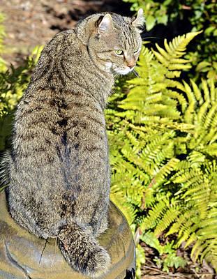 Cat And Ferns Art Print by Susan Leggett