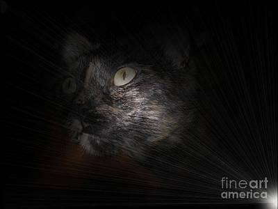 Photograph - Cat And Light by Oksana Semenchenko