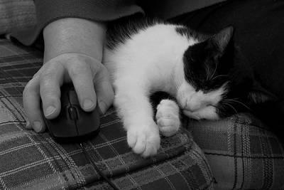 Photograph - Cat And Mouse by Daniel J Kasztelan