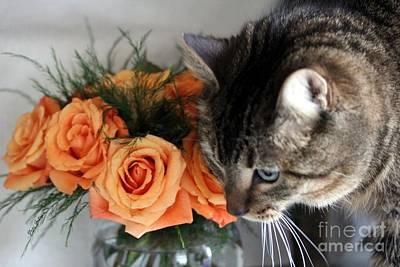 Cat And Roses Art Print