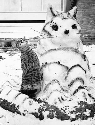 Photograph - Cat And Snowcat by Jack Rosen