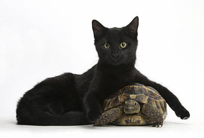 House Pet Photograph - Cat And Tortoise by Mark Taylor