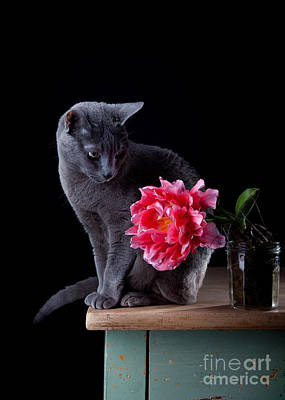 Sweet Photograph - Cat And Tulip by Nailia Schwarz