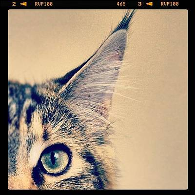 Eye Photograph - #cat #animal #cute #adorable #kitten by Jill Battaglia