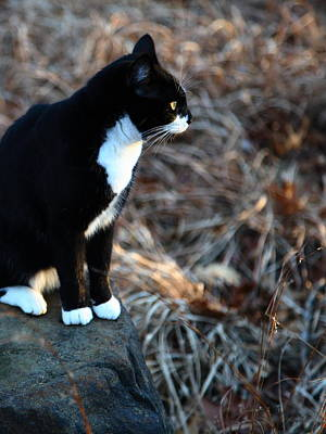 Photograph - Cat At Sunrise by Michael Dougherty