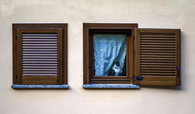 Photograph - Cat At The Window by Roberto Pagani