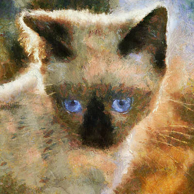 Pets Art Digital Art - Cat Blue Eyes by Yury Malkov