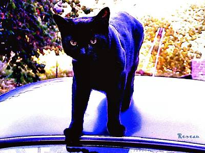 Photograph - Cat Burglar by Sadie Reneau