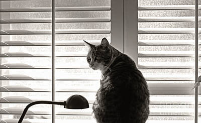 Photograph - Cat By Window by Charline Xia