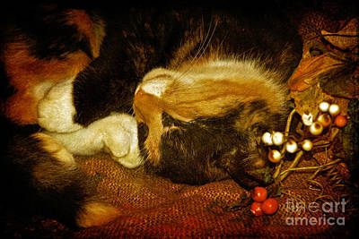 Cat Catnapping Art Print by Lois Bryan