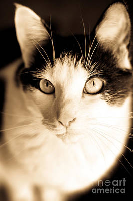 Photograph - Cat by Cheryl Baxter
