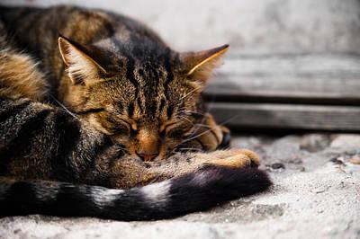 Winter Sleep Photograph - Cat by Daniel Kocian