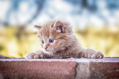 Kittens Wall Art - Photograph - Cat by Daniel Villalobos
