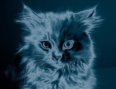 Cat Duotone Original