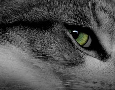 Cat Eye Art Print by AR Annahita