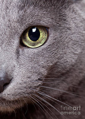 Silver Photograph - Cat Eye by Nailia Schwarz