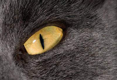 Cat Eye Art Print by Nigel Downer