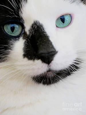 Cat Eyes Art Print by Birgit Tyrrell