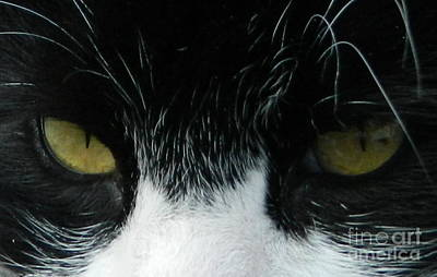 Photograph - Cat Eyes by Chalet Roome-Rigdon