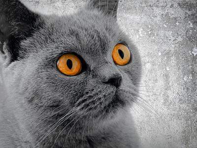 Cat Eyes Art Print by Daniel Hagerman