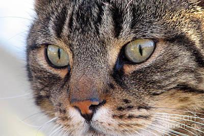 Digital Art - Cat Eyes by Eva Kaufman