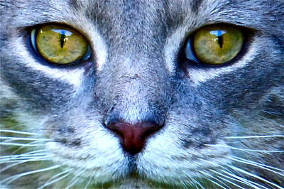 Photograph - Cat Eyes by Jean Wright