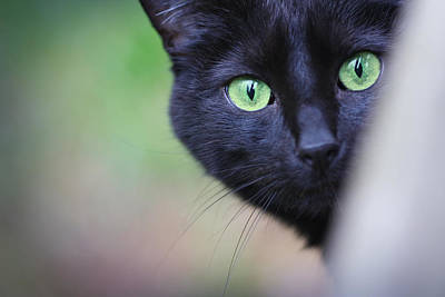 Photograph - Cat Eyes by Melinda Fawver