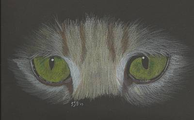 Drawing - Cat Eyes Study by Sheila Byers