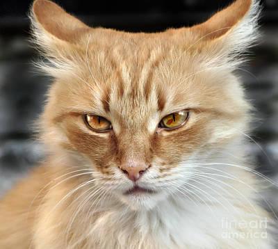 Photograph - Cat Face by Daliana Pacuraru