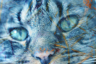 Photograph - Cat Face by Marie Jamieson
