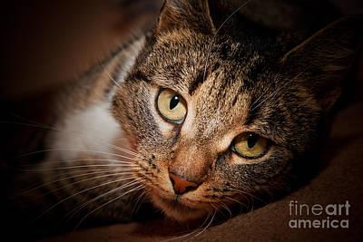 Moody Photograph - Cat Face Portrait by Michal Bednarek
