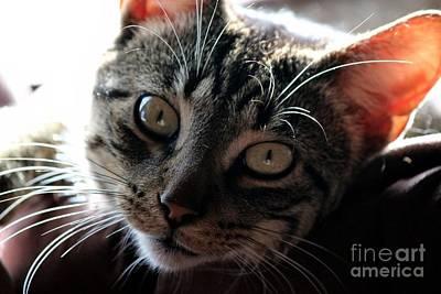 Photograph - Cat Gaze by Janice Byer