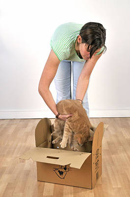 Pet Care Photograph - Cat Going In Box by John Daniels