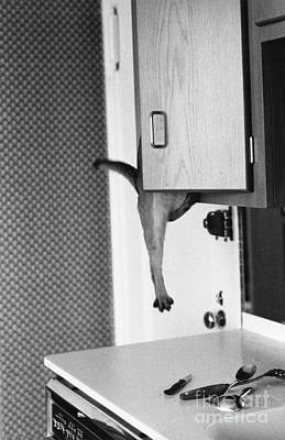 Photograph - Cat Hanging From Kitchen Cabinet by Joan Baron