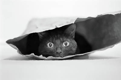 Shopping Bags Photograph - Cat In A Bag by Jeremy Holthuysen